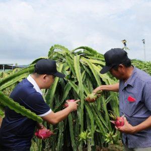 foodconnect-gia-phap-lien-ket-nong-san5-1014_20200816_198-153342